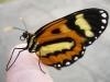 borboleta-07