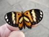 borboleta-08